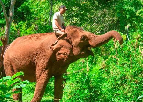 Elefant in Mondulkiri Kambodscha