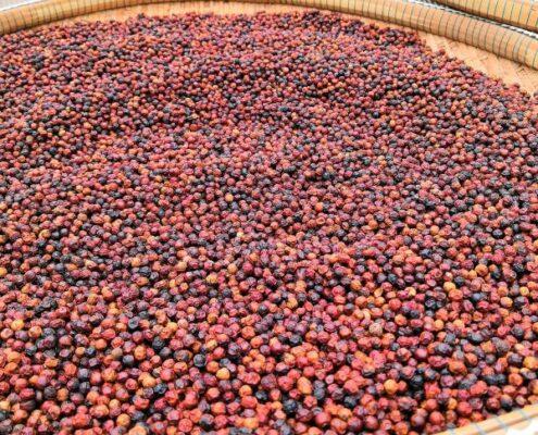 Kampot Pepper - Pfefferfarm Kambodscha - roter Pfeffer