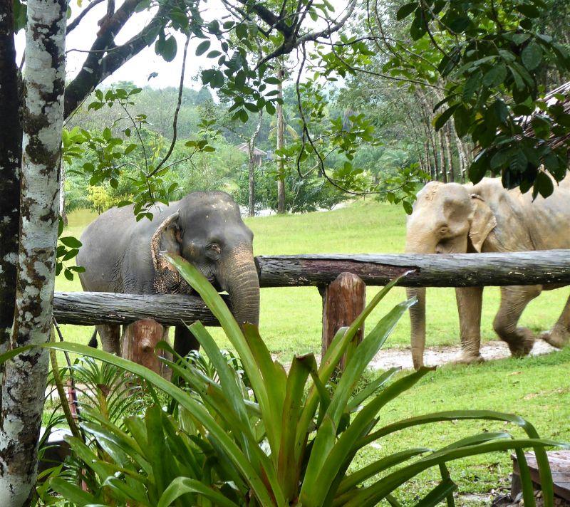 Khao Sok Nationalpark Süd-Thailand