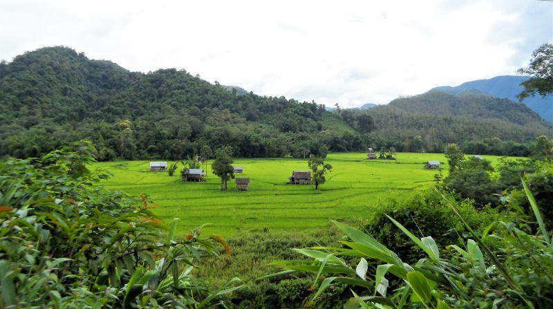Laos Norden Bergwelt Reisfelder