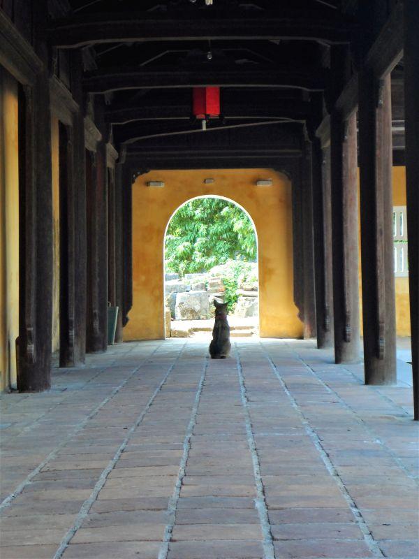 Alte Kaiserstadt Hue - Hund in Tempel