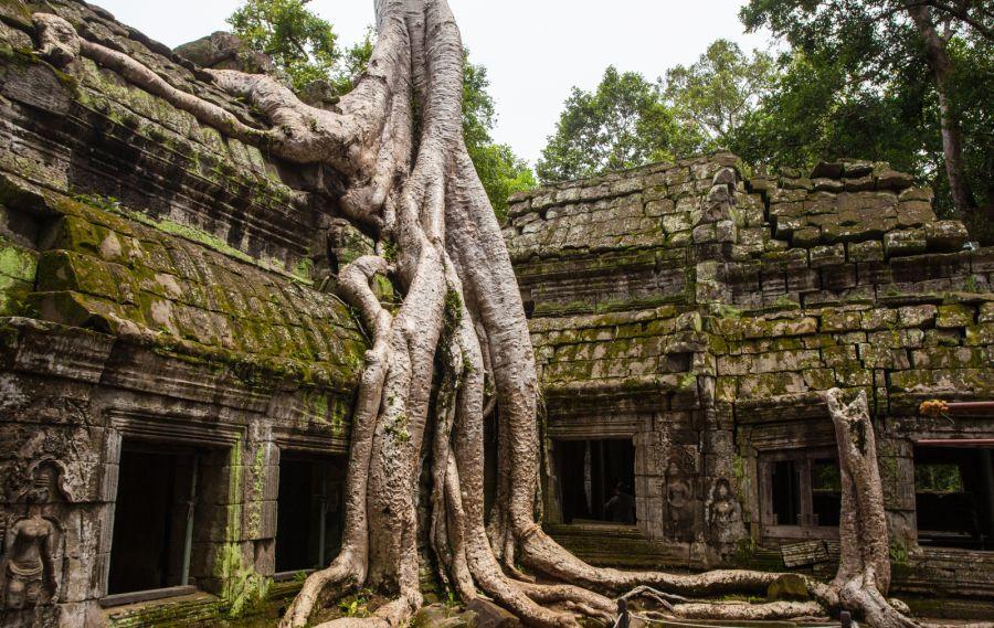 Ta Phrom Tempel Angkor Wat Kambodscha