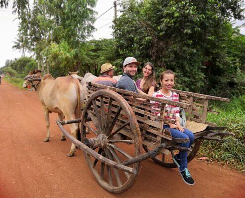 Transport mal anders, Ochsenkarrenfahrt in Siem Reap, Kambodscha