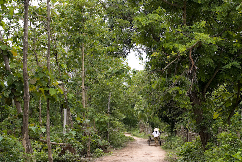 Don Daeng Insel Südlaos
