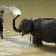 Elefanten baden hautnah in Laos