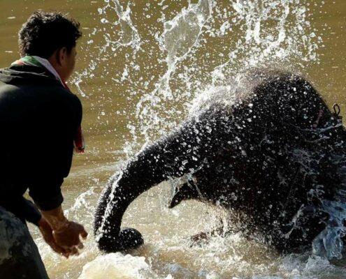 Elefanten baden im Norden von Laos