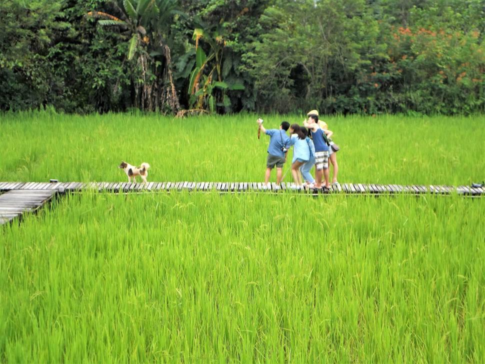 Eine junge Gruppe hat Spaß in den Reisfeldern von Vang Vieng
