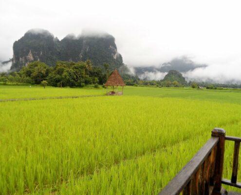 mystischer Nebel in den Reisfeldern von Vang Vieng, Laos
