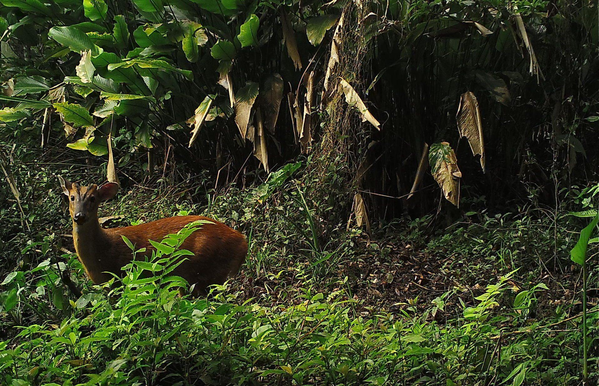 Ein Hirsch auf der Nam Nern Nachtsafari